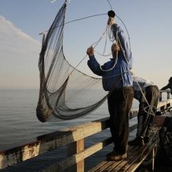 http://sarasponga.com/files/gimgs/th-52_52_honey-watch-my-big-fish-.jpg